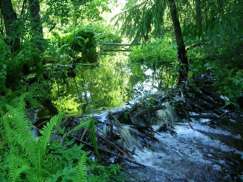 Центрально-Лесной