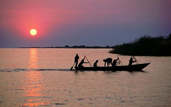 в  реке Конго обнаружены новые виды редких животных