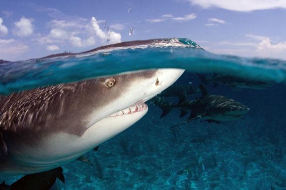 Мировой рекорд боуфишинга - охота на акулу-мако с луком ∞ Лагуна акул | 386x580