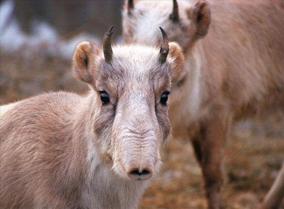 Чувашия и Казахстан: новые запреты на охоту