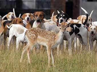 Нагонка гончих собак