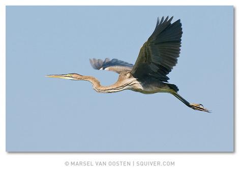 Фотограф Marsel van Oosten