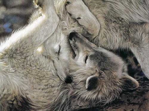 Картины художника Lesley Harrison