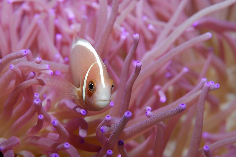 Подводные создания от фотографа Giambattista Isabella