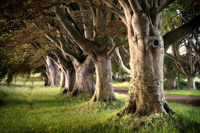 Деревянные полки на стену своими руками фото артиста неизменно