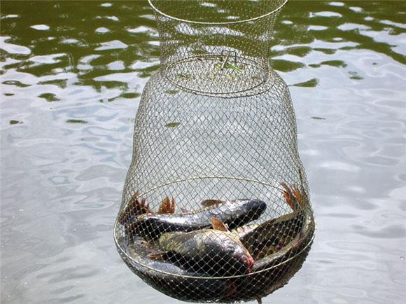 как сохранить улов, как сохранить рыбу в жару, способы сохранности улова, способы сохранить рыбу свежей, как сохранить улов летом, сохранить улов свежим, способы сохранить улов, сохранить улов на рыбалке