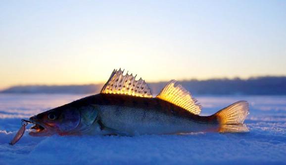 Зимняя рыбалка, судак