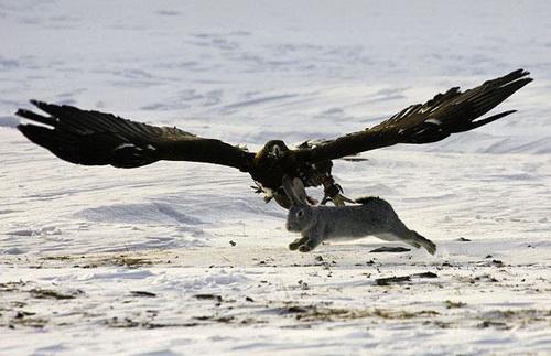Охота с ловчей птицей