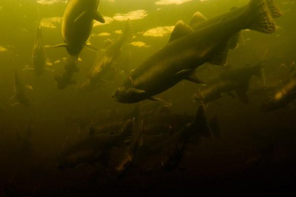 карелия фото подводная охота маленький джигит ансар