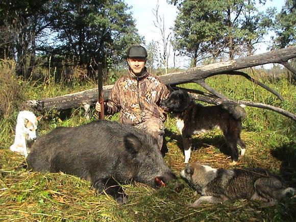 Охота на кабана: Кабан - консерватор