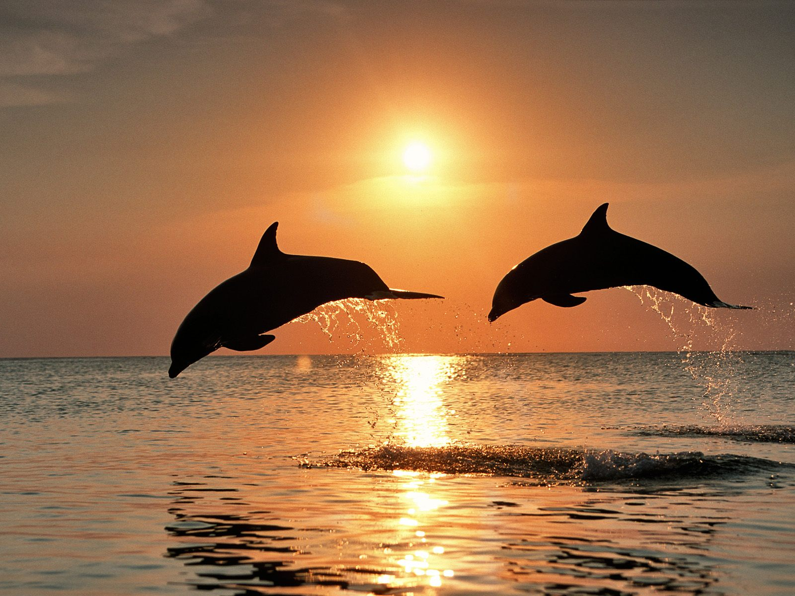 Фотоподборка животных и рыб