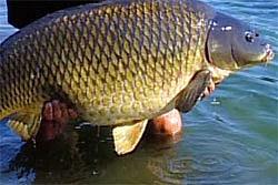 соревнования, рыбалка