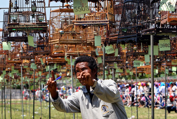 Конкурс певчих птиц в Тайланде