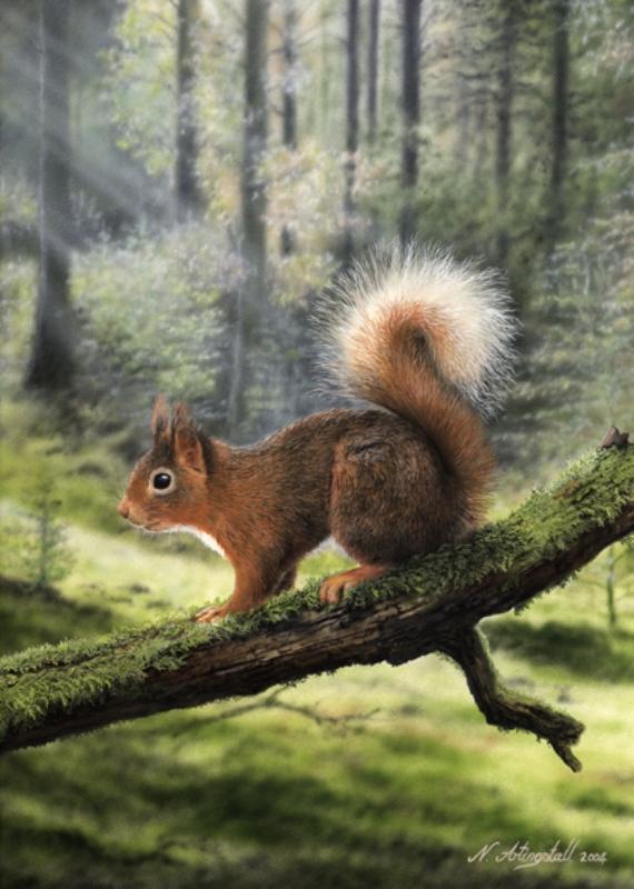 Лесные животные от художника Nigel Artingstall