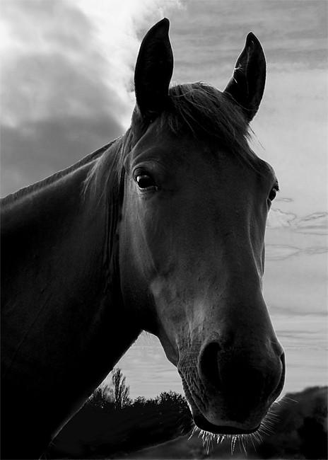 Лошади от фотографа Юрия Matr