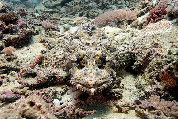 Рыба-крокодил замаскировалась на морском дне на Бали