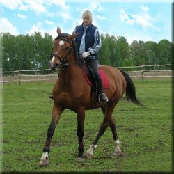 Обучение верховой езде,прокат лошадей, лошадь