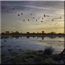Охота на утку в Тверской области