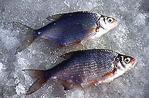рыбалка, густера