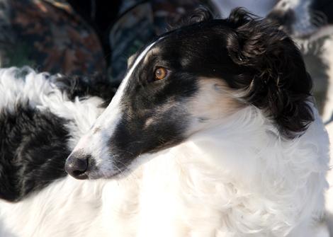 Язык псовой охоты