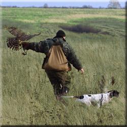 Натаска легавых Долголуговское охотхозяйство