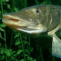 рыбалка, рыболовные туры