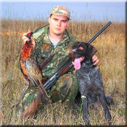 Охота с легавой на фазана чтобы сохранить