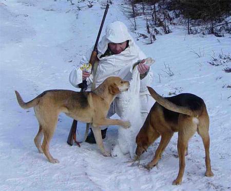 Охота на зайца - Охота, рыбалка, отдых, туризм, банк, благотворительность 626-22-06