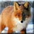 Охота на лису зайца в Подмосковье