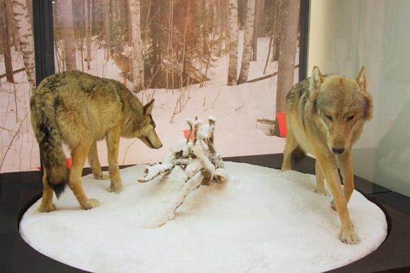 Музей охоты и рыболовства, волки