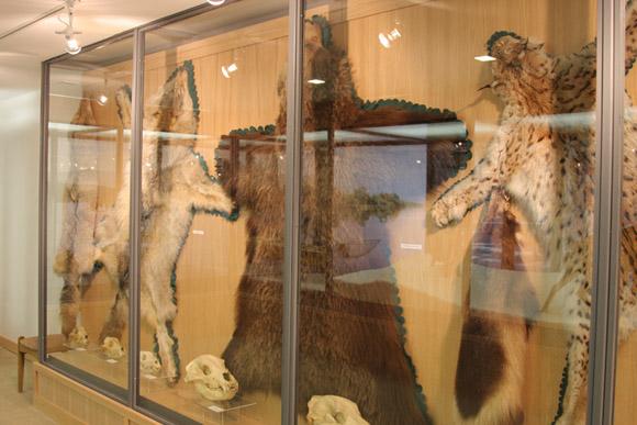Музей охоты и рыболовства, ковры из шкур