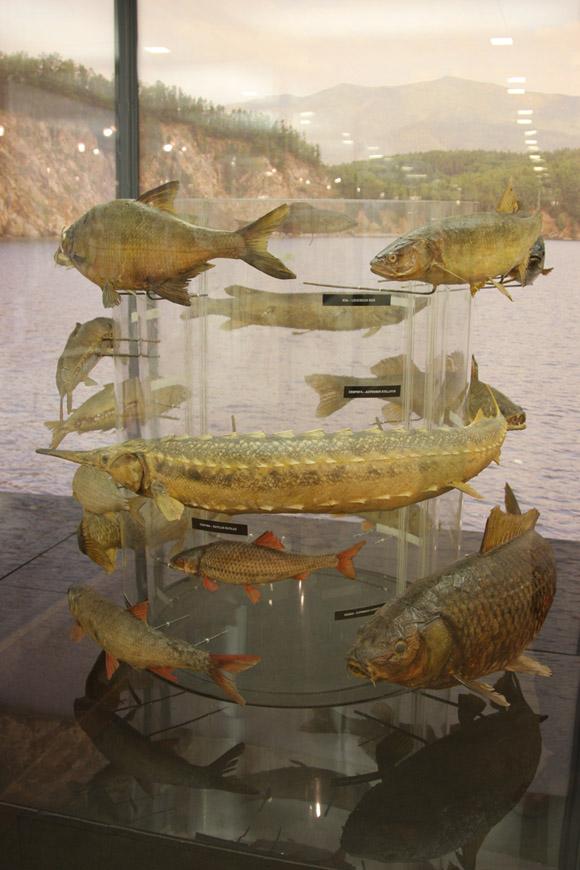 Музей охоты и рыболовства, рыбы