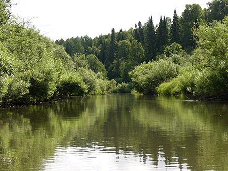 Кологривский лес Заповедник