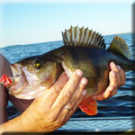 Рыбалка на Нижней Волге, рыбалка в Астрахани
