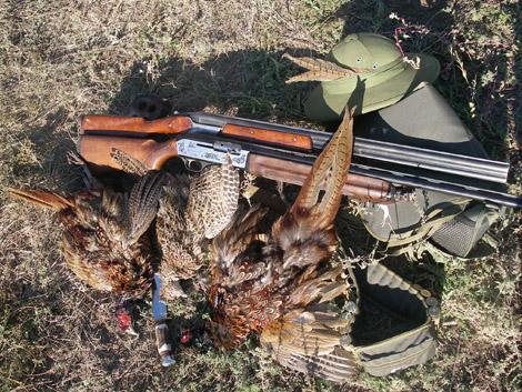 Стрельба по тарелкам и охота на фазана