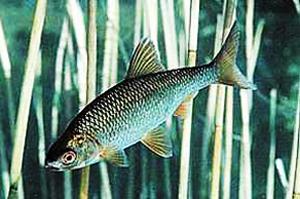 рыбалка, плотва