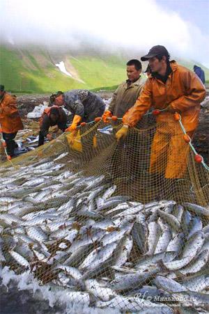 вылов водных биоресурсов российскими рыбохозяйственными организациями