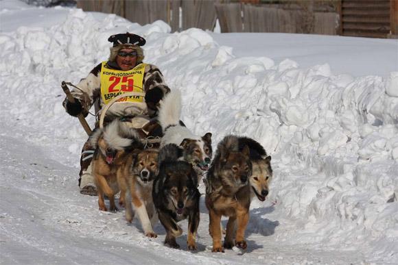 """На Камчатке завершился очередной этап гонки на собачьих упряжках """"Берингия"""""""