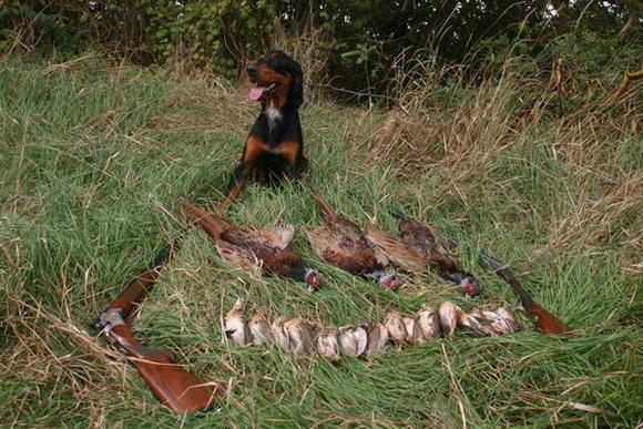 перед как добыть фазана без собаки ремонт