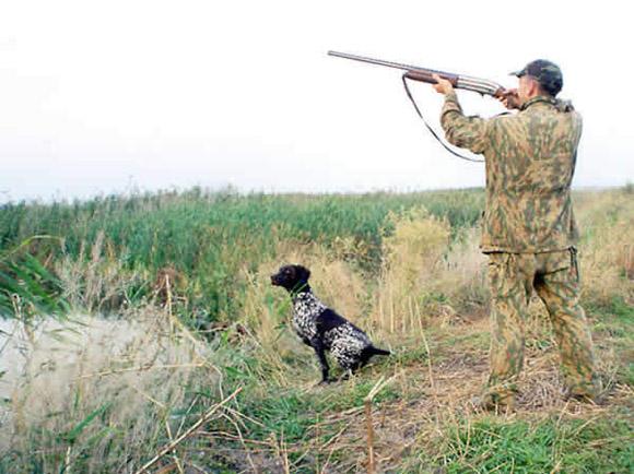 Теория правильной натаски. Приучение собаки к выстрелу