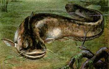 рыбалка, сом