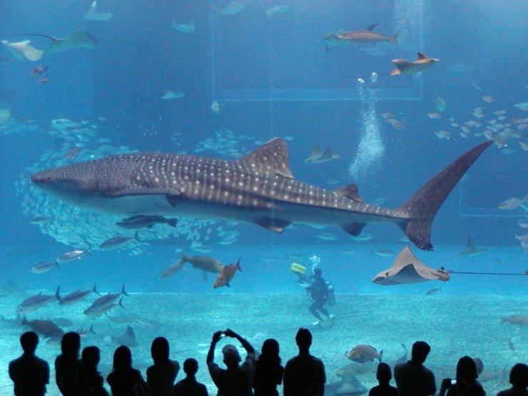 Самая большая в мире рыба