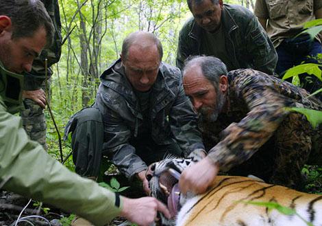 Путин и тигр
