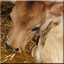 Коровье молоко, экологический туризм