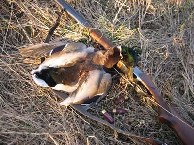 Охота на утку - Охота, рыбалка, отдых, туризм, банк, благотворительность 626-22-06